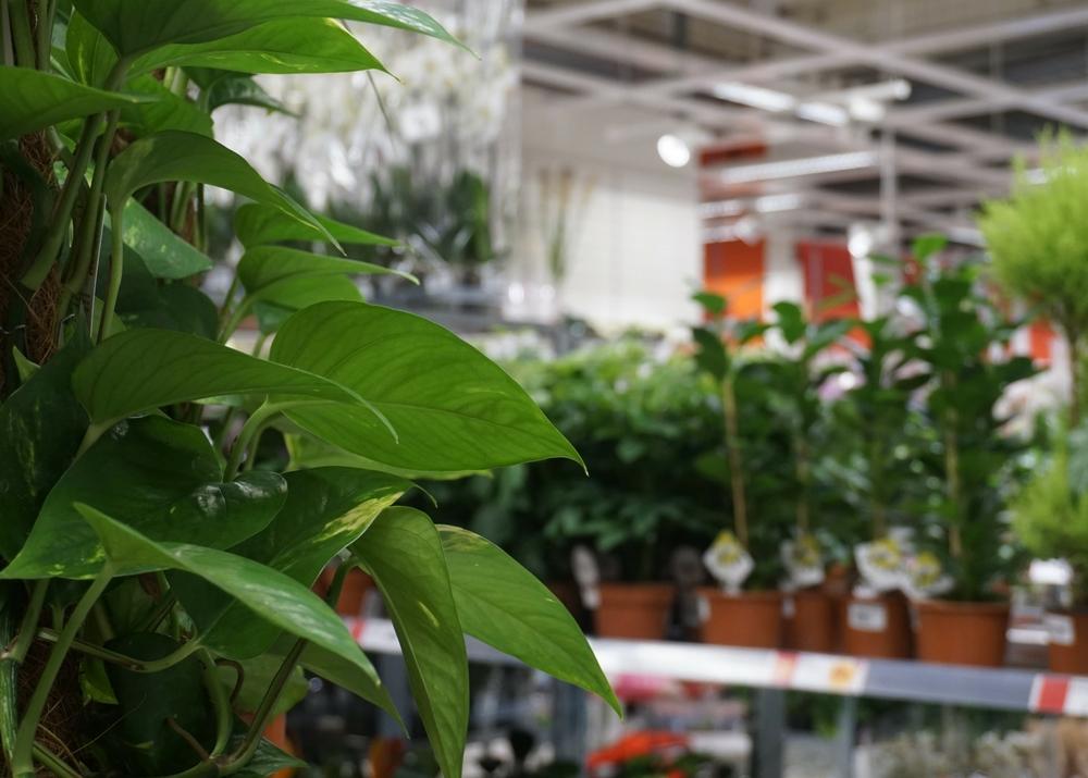 Det är viktigt att använda belysning med bra ljusegenskaper och färgåtergivning - återger man grönska fel, till exempel, så kan grönsaker eller växter se oaptitliga eller märkliga ut.